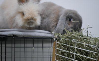 Vivir con un conejo por primera vez