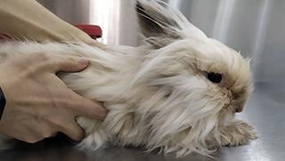 Principales enfermedades en conejos