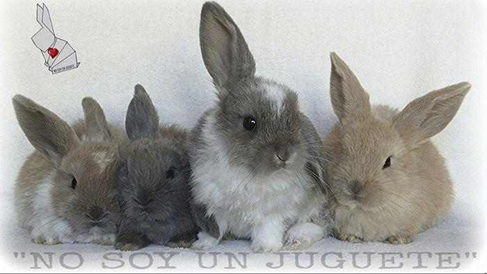 no-compres-adopta-viviendo-con-un-conejo