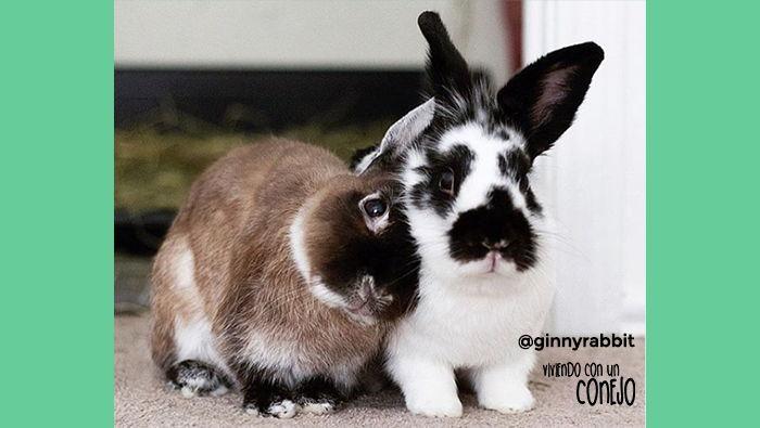 ecuniculi-ginny-viviendo-con-un-conejo