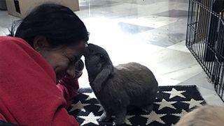 Cómo hacer que tu conejo te tenga confianza