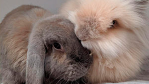 lenguaje-conejos-viviendo-con-un-conejo