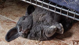 Cosas de conejos que parecen raras (y no lo son)