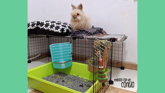 porque-conejo-muerde-barrotes-viviendo-con-un-conejo