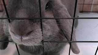Por qué mi conejo muerde la jaula